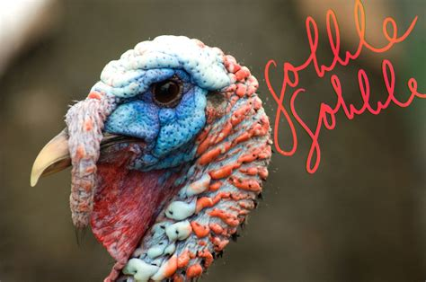 does hair emphasize a turkey neck say goodbye to gobble gobble with kybella 174