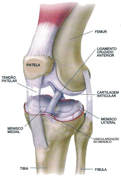 menisco interno br physio les 195 o de meniscos