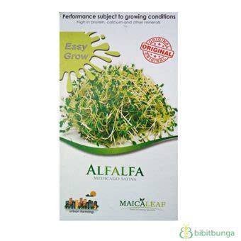 Obat Herbal Alfalfa benih rumput alfalfa 50 biji maica leaf bibitbunga