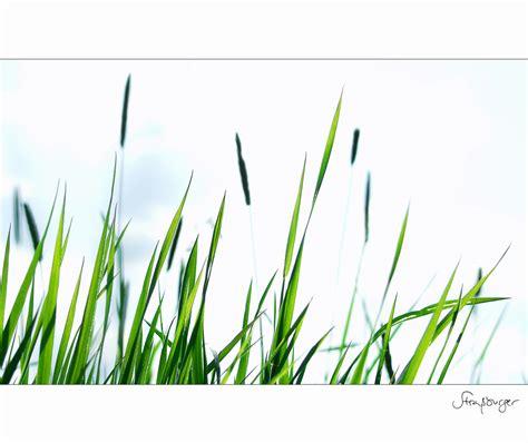 klimmzüge im liegen im gras liegen foto bild emotionen spezial bilder auf