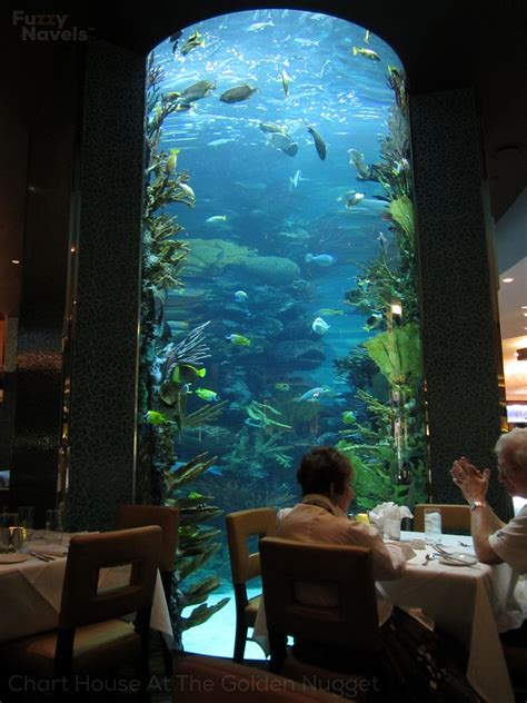 fish tank house chart house aquarium restaurant in las vegas fuzzy navels