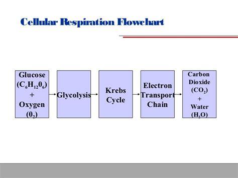 cellular respiration flowchart cellular respiration