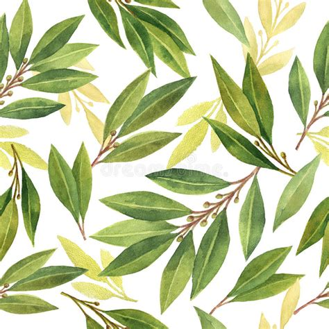 Bay Leaves Pattern by Watercolor Bay Leaf Seamless Pattern Of Flowers And Leaves