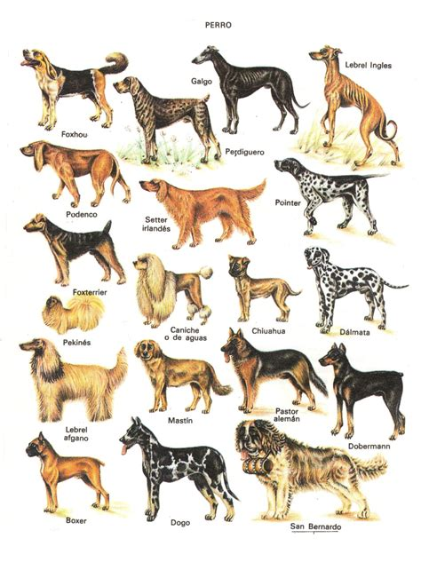 all types of dogs names of all different types of breeds picture
