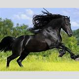 Images Of Baby Horses Running   2560 x 2048 jpeg 900kB