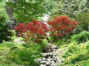 lady gaga illuminati japanese maple varieties