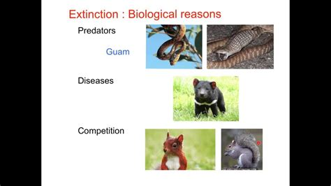 gcse biology extinction youtube