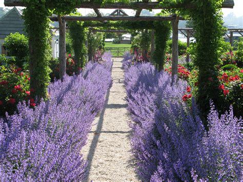 Lavender Garden Design Photograph Connecticut Cottag Lavender Garden Ideas