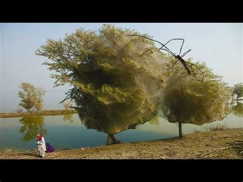 strange spider trees
