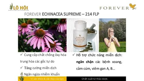 forever echinacea supreme forever echinacea supreme 214 flp
