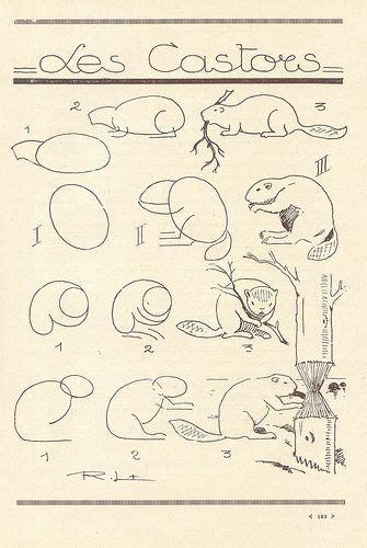 doodlebug apex nc best 25 beaver drawing ideas on beaver