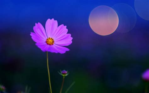 peaceful nature flowers wallpapers weneedfun