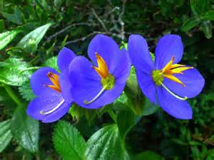 Images Of Beautiful Flowers binara flowers endemic to sri lanka udana jeewantha