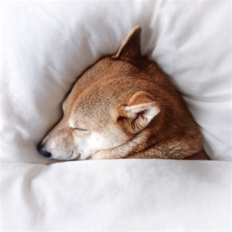 imagenes variadas animales srta pepis perros pinterest animales imagenes