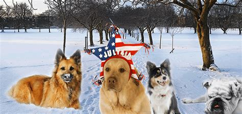 most popular dogs in america most popular breeds in america official ranking