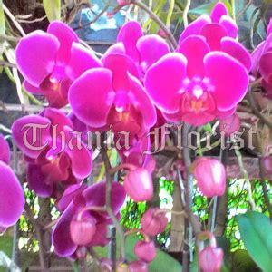 Tanaman Violces Ungu jual anggrek thania florist jual mawar jual bunga