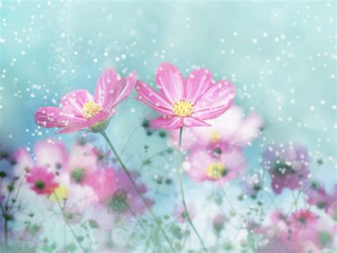 wallpaper pink and blue floral pink and blue flowers wallpaper
