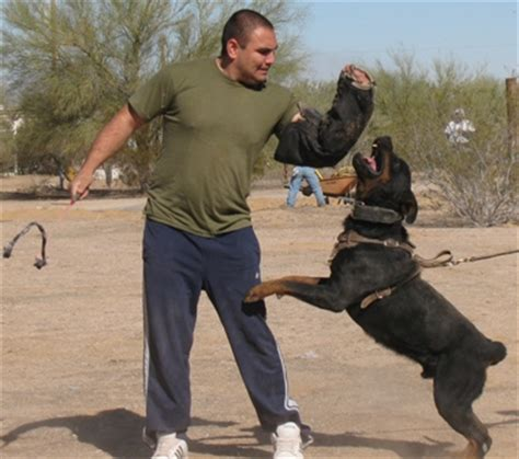 k9 rottweiler k9 working dogs protection schutzhund arizona rottweiler