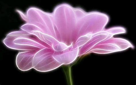 fiore flowers black and white wallpapers artistic pink flower wallpaper