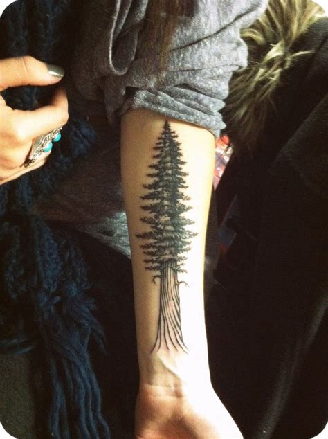 redwood tattoo redwood tree tattoos pictures to pin on tattooskid