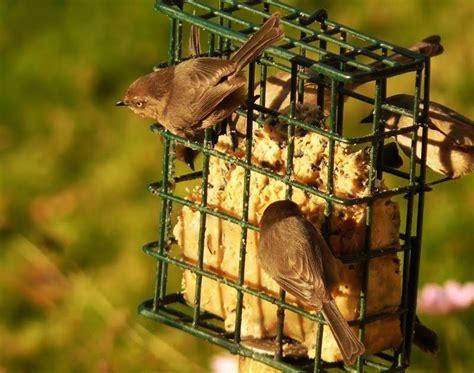 portland oregon backyard birds flora  fauna nature company