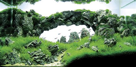 aquascaping tank post your favorite aquascape the planted tank forum