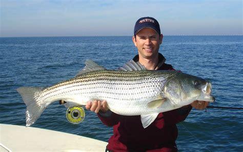 striper bay boats striped bass fishing deanlevin info