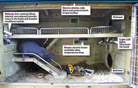 Cool Pets Rabbit Hutch Most Pampered Pets In The World Two Rabbits Live In 163