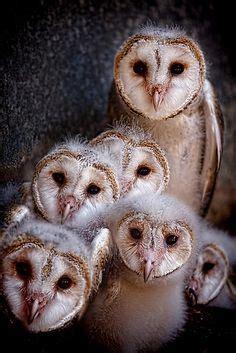 Tshirt Natgeo Wildlife 1000 images about birds bird houses on