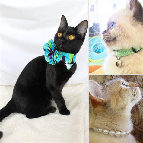 Cat Handmade - handmade cat collars popsugar pets