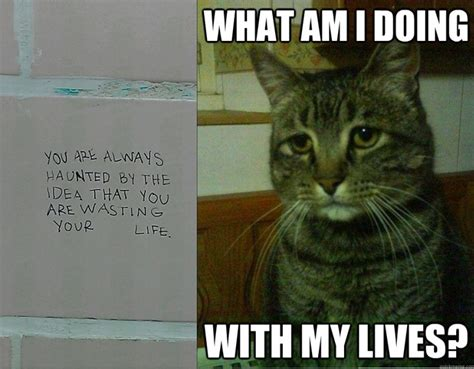 Depressed Cat Meme - depressed cat memes image memes at relatably com