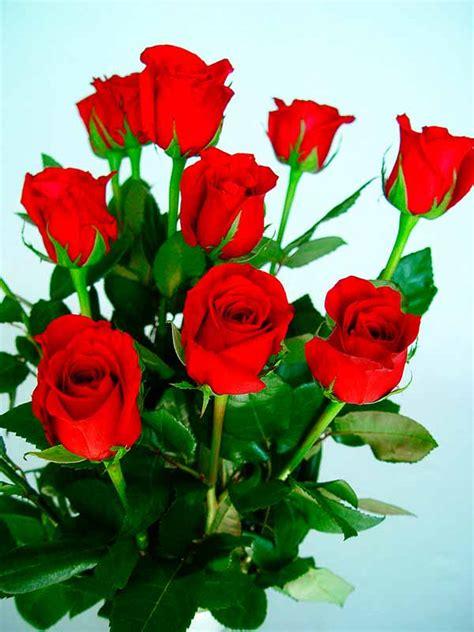 imagenes de flores naturales bonitas flores bonitas fotos im 225 genes de flores hermosas