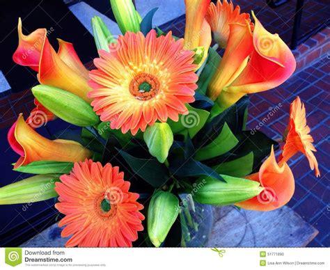 beautiful orange beautiful orange flowers stock photo image 51771690