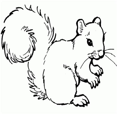 coloring page of squirrel squirrel pictures for kids az coloring pages