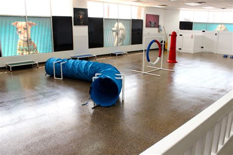 room pets visits newly opened doggie daycare d pet hotels scottsdale photos scottsdale living