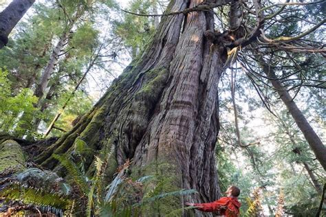 stunning grove  unprotected  growth trees located