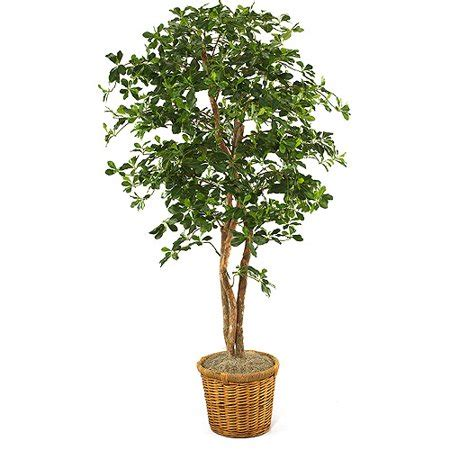 olive tree  planter walmartcom