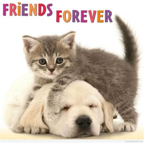friends images best friends forever quotes images and friends wallpapers