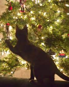 cats christmas trees climbing disaster