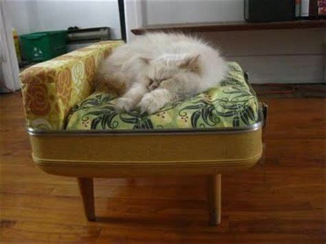 Handmade Cat Beds - diy cat beds www imgkid the image kid has it