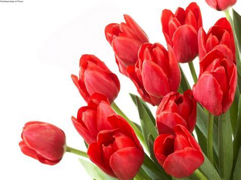image for flowers rose flower image free download flower images