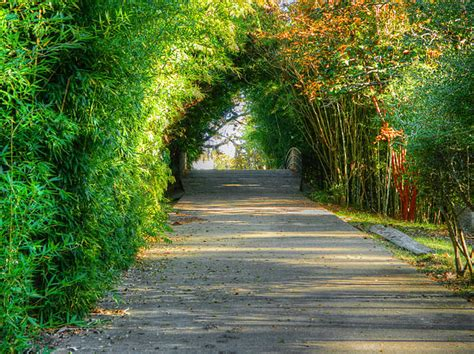 Louisiana Purchase Gardens And Zoo by Louisiana Purchase Gardens And Zoo Pathway By Ester Rogers