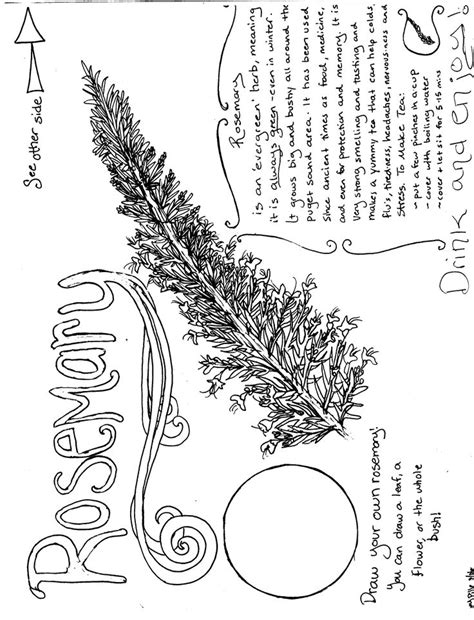 thyme herb coloring pages sketch coloring page