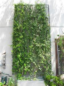 Planter With Trellis by How To Prune A Wall Mounted Green Facade Green Wall