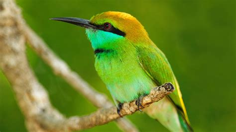 wallpaper green with birds download wallpaper 1920x1080 macro photography of green