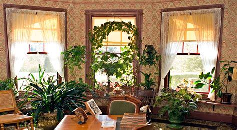 alberi da appartamento piante ricanti da appartamento duylinh for