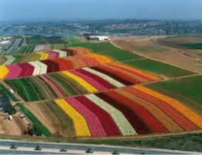 Carlsbad Flower - beautiful places amp spaces the flower farm carlsbad