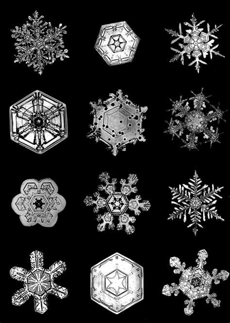 snowflake bentley vermont dead line wilson quot snowflake quot bentley