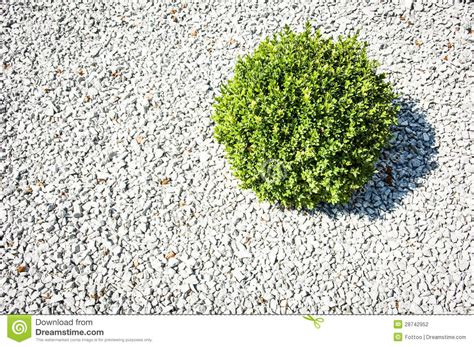 Plants For Formal Gardens - small bush stock photography image 28742952