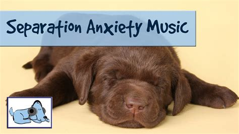 calming sounds for dogs 30 minutes of relaxing calming sounds to relax anxious dogs separation